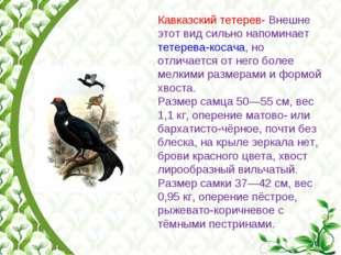 Кавказский тетерев- Внешне этот вид сильно напоминает тетерева-косача, но отл