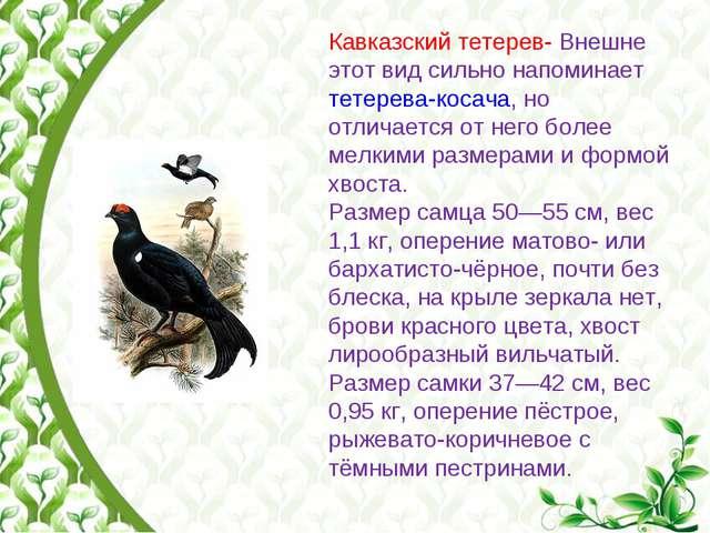 Красная Книга Ставропольского Края Презентация