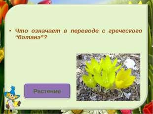 """Что означает в переводе с греческого """"ботанэ""""?"""