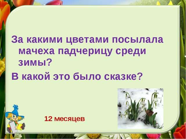 За какими цветами посылала мачеха падчерицу среди зимы? В какой это было сказ...