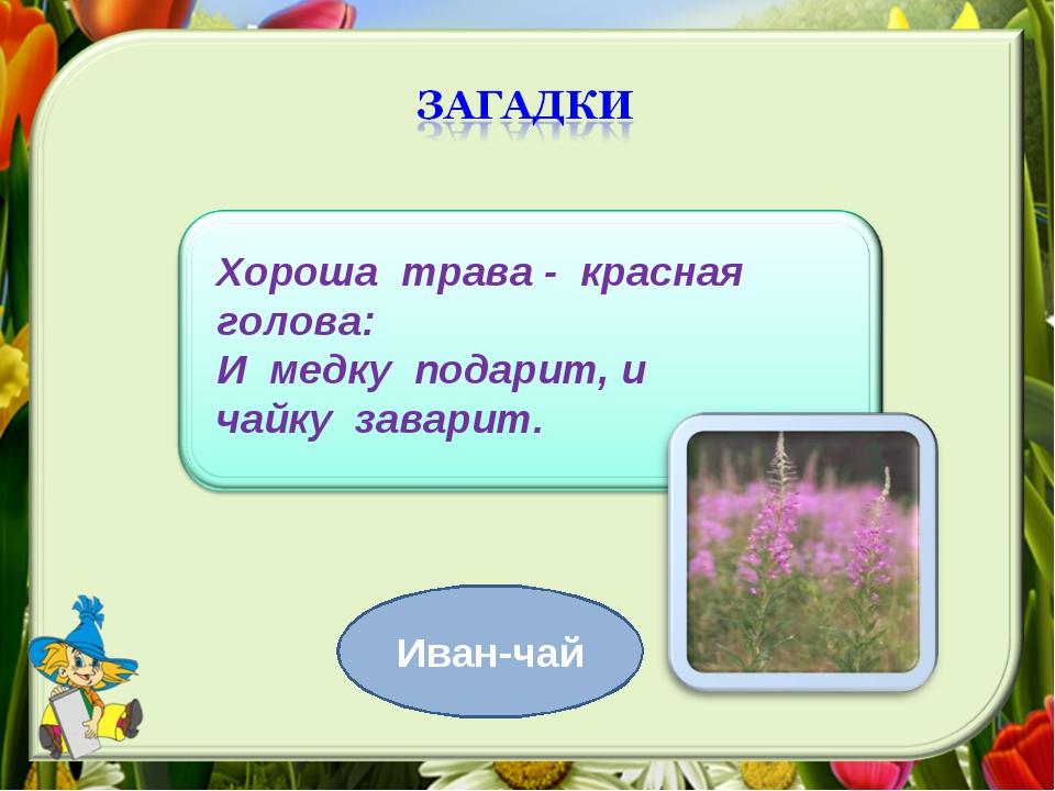 Хороша трава - красная голова: И медку подарит, и чайку заварит. Иван-чай
