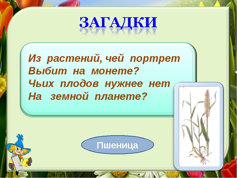 Из растений, чей портрет Выбит на монете? Чьих плодов нужнее нет На земной пл...