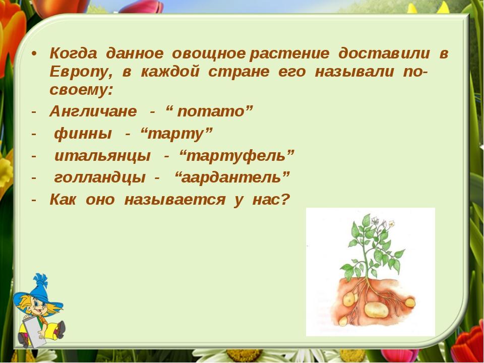 Когда данное овощное растение доставили в Европу, в каждой стране его называл...
