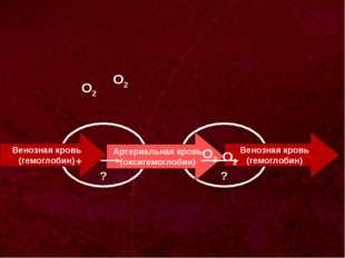 ? Венозная кровь (гемоглобин) О2 ? Артериальная кровь (оксигемоглобин) Веноз