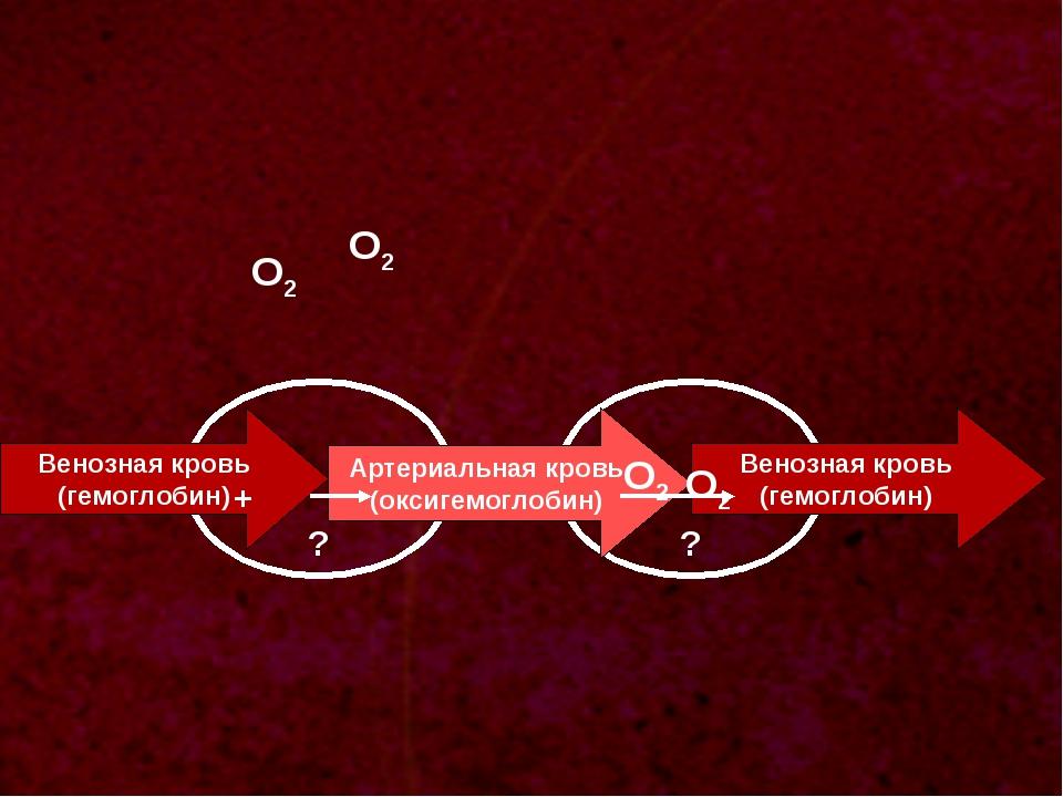 ? Венозная кровь (гемоглобин) О2 ? Артериальная кровь (оксигемоглобин) Веноз...