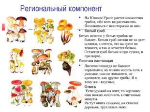 Региональный компонент На Южном Урале растет множество грибов, обо всех не ра