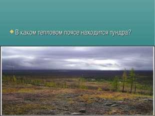 В каком тепловом поясе находится тундра?