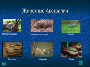 Животные Австралии Млекопитающие Примитивные млекопитающие птицы Рептилии Амф