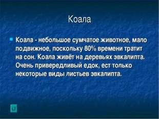 Коала Коала - небольшое сумчатое животное, мало подвижное, поскольку 80% врем