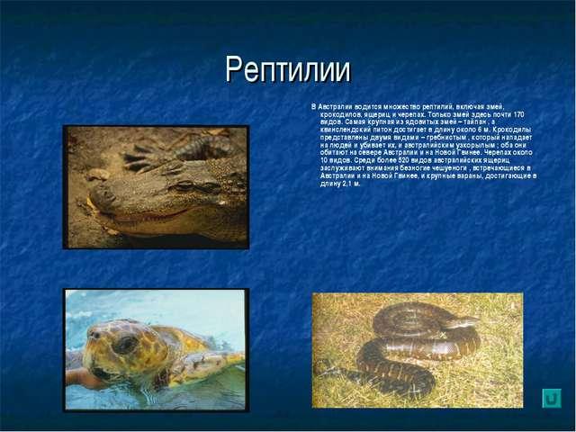 Рептилии В Австралии водится множество рептилий, включая змей, крокодилов, ящ...
