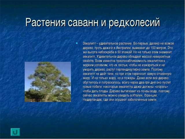 Растения саванн и редколесий Эвкалипт – удивительное растение. Во-первых, дал...