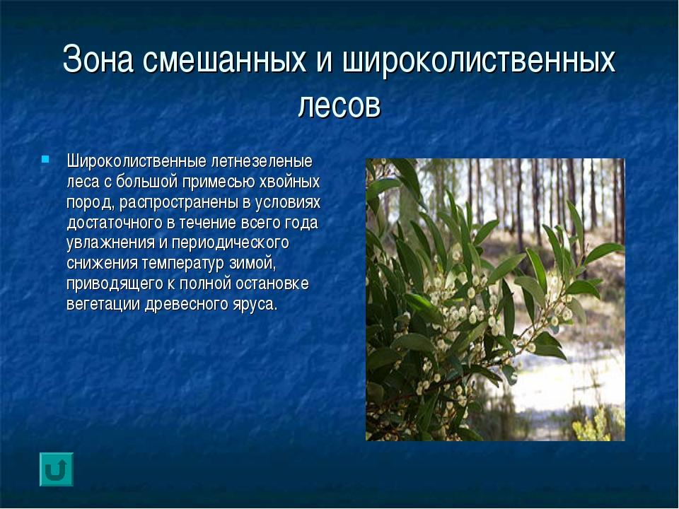 Зона смешанных и широколиственных лесов Широколиственные летнезеленые леса с...