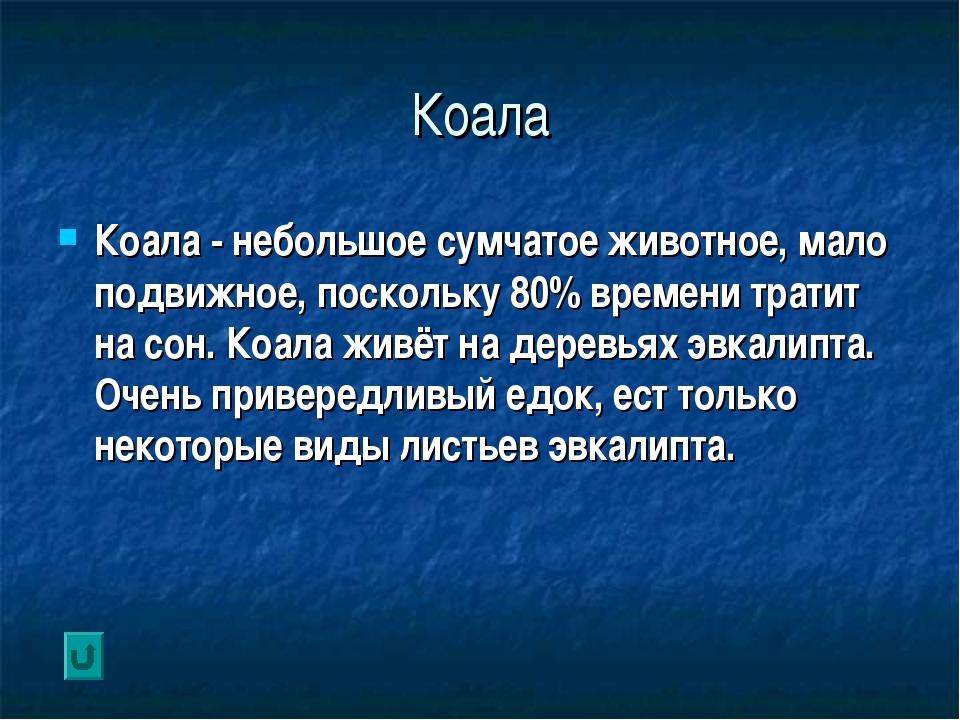 Коала Коала - небольшое сумчатое животное, мало подвижное, поскольку 80% врем...