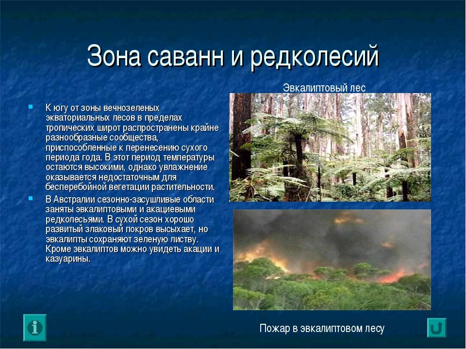 Зона саванн и редколесий К югу от зоны вечнозеленых экваториальных лесов в пр...