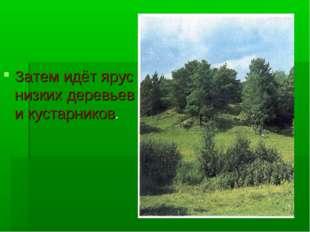 Затем идёт ярус низких деревьев и кустарников.