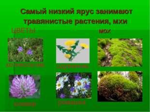 Самый низкий ярус занимают травянистые растения, мхи мох ЦВЕТЫ колокольчик од