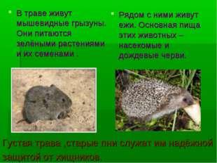 В траве живут мышевидные грызуны. Они питаются зелёными растениями и их семен