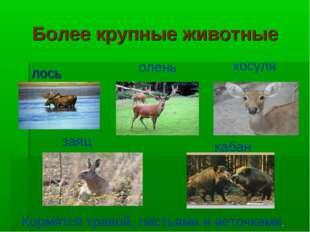 Более крупные животные лось олень косуля заяц кабан Кормятся травой, листьями
