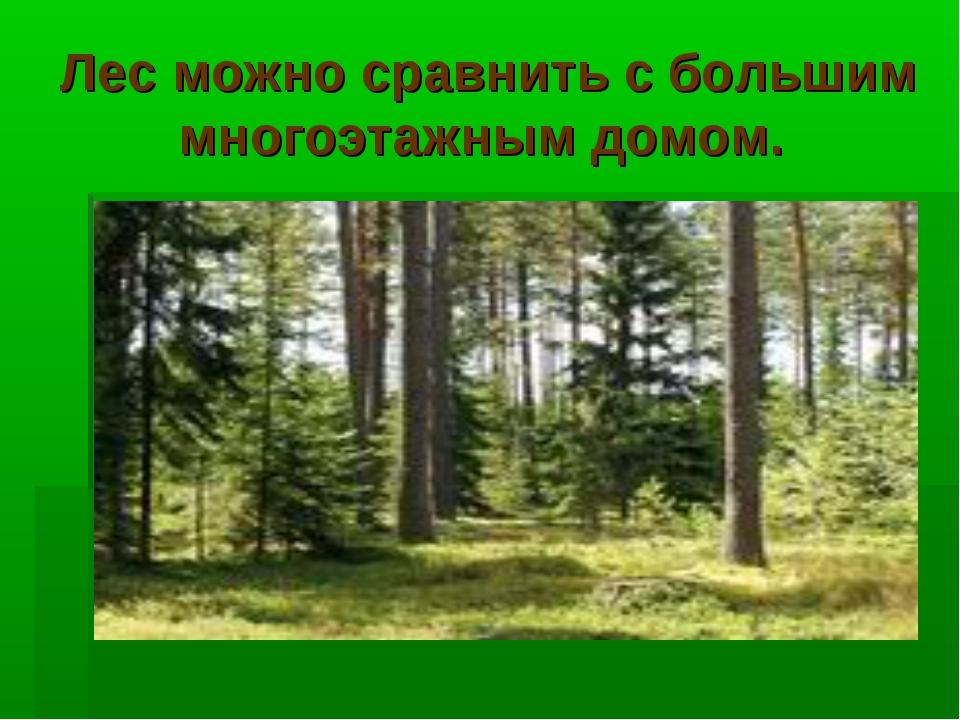 Лес можно сравнить с большим многоэтажным домом.