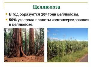 Целлюлоза В год образуется 1011 тонн целлюлозы. 50% углерода планеты «законс