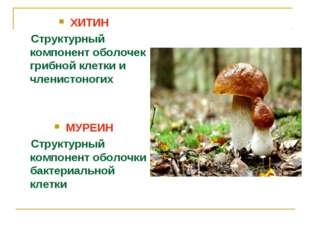 ХИТИН Структурный компонент оболочек грибной клетки и членистоногих МУРЕИН С