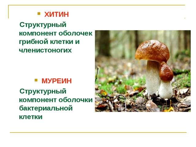 ХИТИН Структурный компонент оболочек грибной клетки и членистоногих МУРЕИН С...