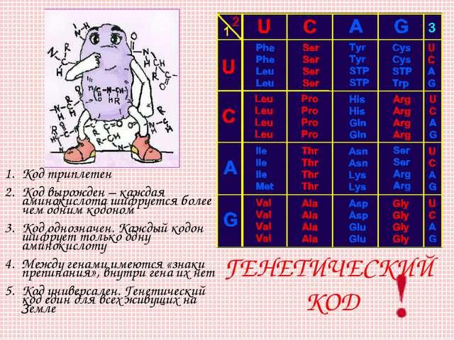 ГЕНЕТИЧЕСКИЙ КОД Код триплетен Код вырожден – каждая аминокислота шифруется б...