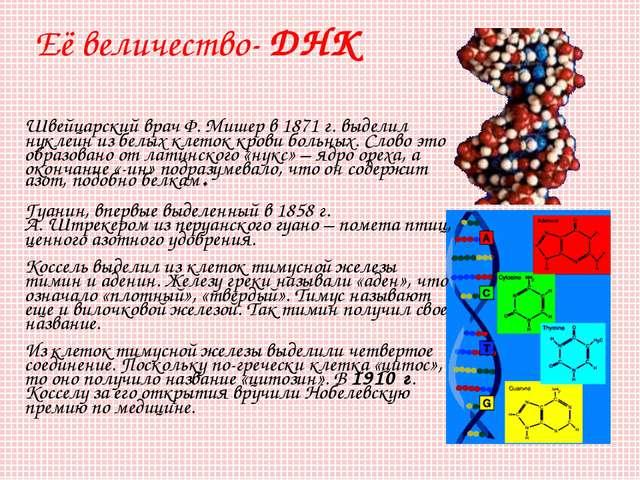 Её величество- ДНК Швейцарский врач Ф.Мишер в 1871г. выделил нуклеин из бел...