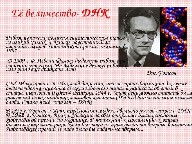 Рибозу поначалу получил синтетическим путем немецкий химик Э.Фишер, удостоен...