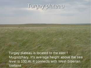 Turgay plateau Turgay plateau is located to the east f Mugodzhary. It's avera