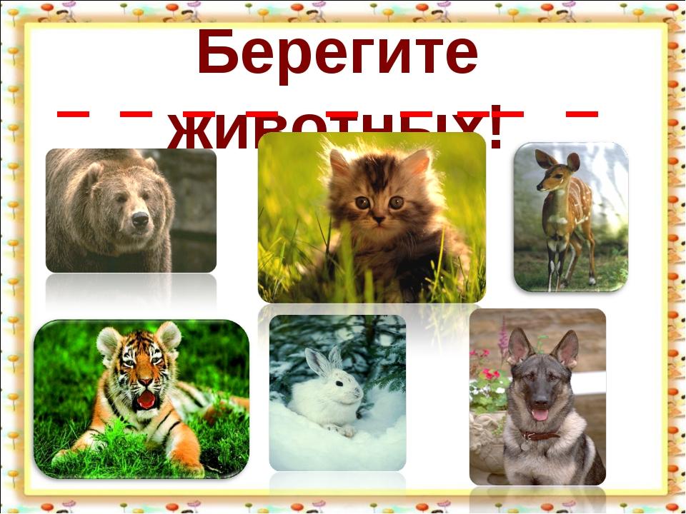 Берегите животных!