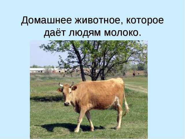Домашнее животное, которое даёт людям молоко.