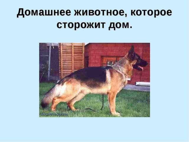 Домашнее животное, которое сторожит дом.