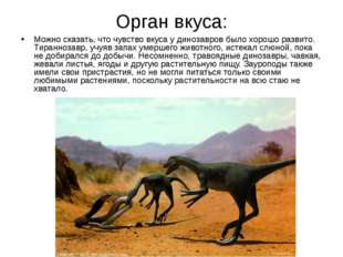 Орган вкуса: Можно сказать, что чувство вкуса у динозавров было хорошо развит