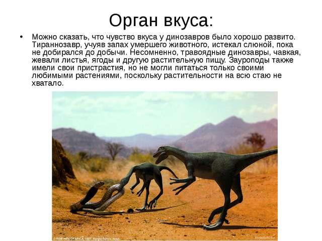 Орган вкуса: Можно сказать, что чувство вкуса у динозавров было хорошо развит...