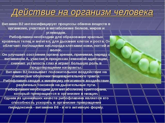 Действие на организм человека Витамин B2 интенсифицирует процессы обмена веще...