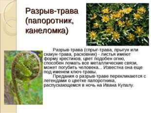 Разрыв-трава (папоротник, канеломка) Разрыв-трава (спрыг-трава, прыгун или