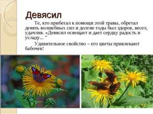 Девясил Те, кто прибегал к помощи этой травы, обретал девять волшебных сил
