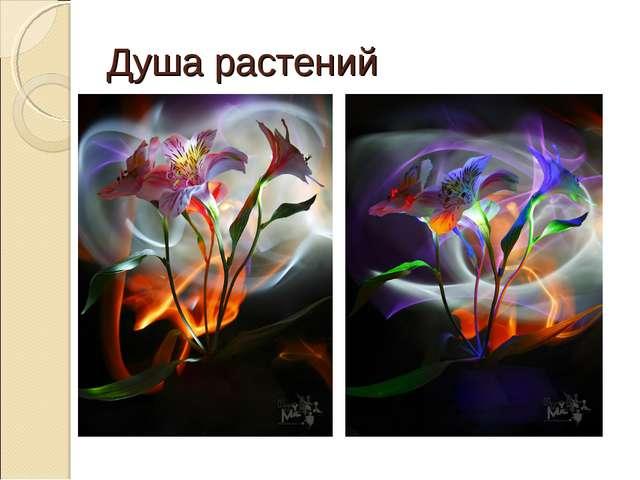 Душа растений