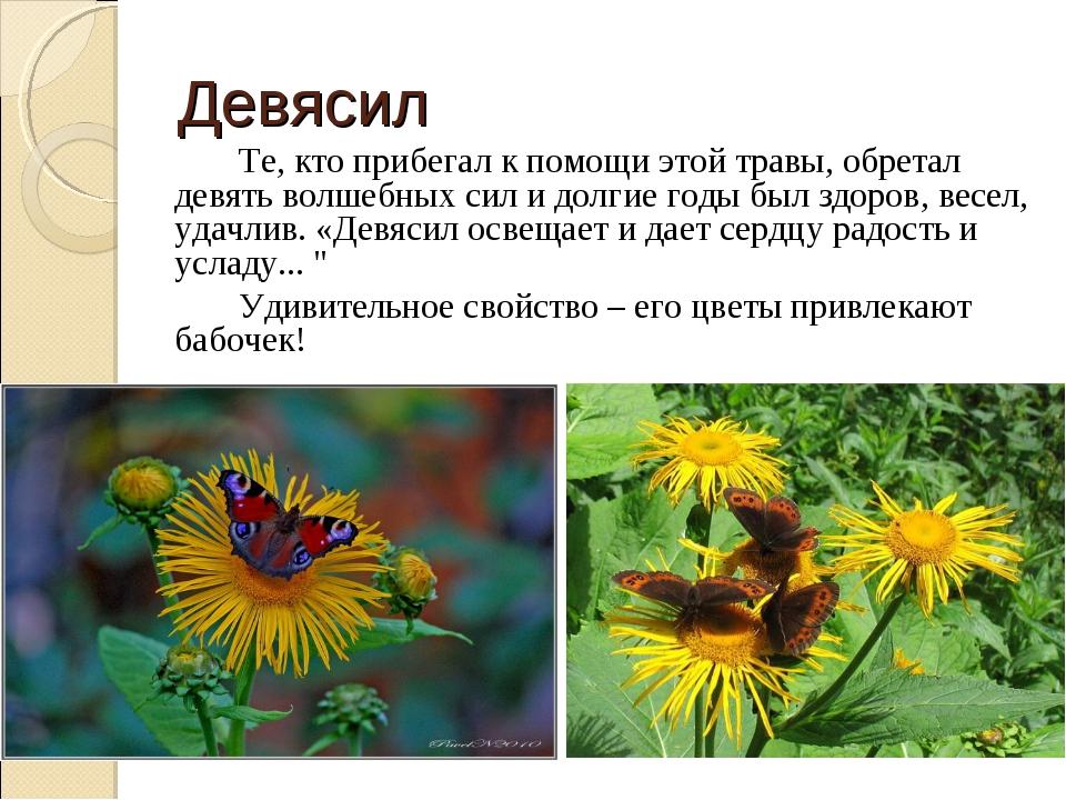 Девясил Те, кто прибегал к помощи этой травы, обретал девять волшебных сил...