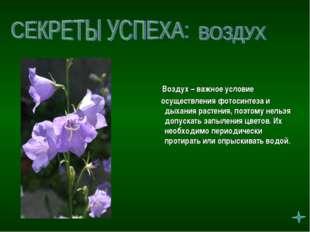 Воздух – важное условие осуществления фотосинтеза и дыхания растения, поэтом