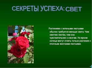 Растениям с зелеными листьями обычно требуется меньше света. Чем светлее лис