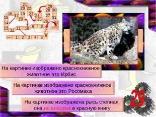 На картинке изображено краснокнижное животное это Ирбис На картинке изображен