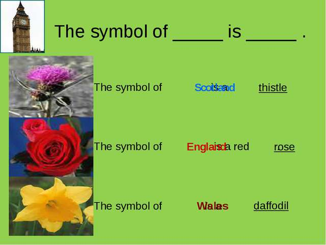 The symbol of _____ is _____ . Scotland England Wales thistle rose daffodil...