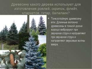Древесину какого дерева используют для изготовления роялей, скрипок, флейт, к