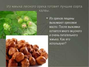 Из жмыха лесного ореха готовят лучшие сорта халвы. Из орехов лещины выжимают