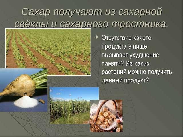 Сахар получают из сахарной свёклы и сахарного тростника. Отсутствие какого пр...