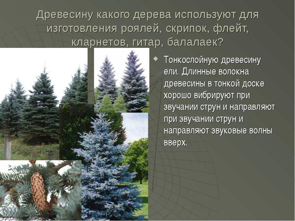 Древесину какого дерева используют для изготовления роялей, скрипок, флейт, к...