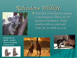 Ridiculous Wildlife. Australia's best-known animal is the kangaroo. There are