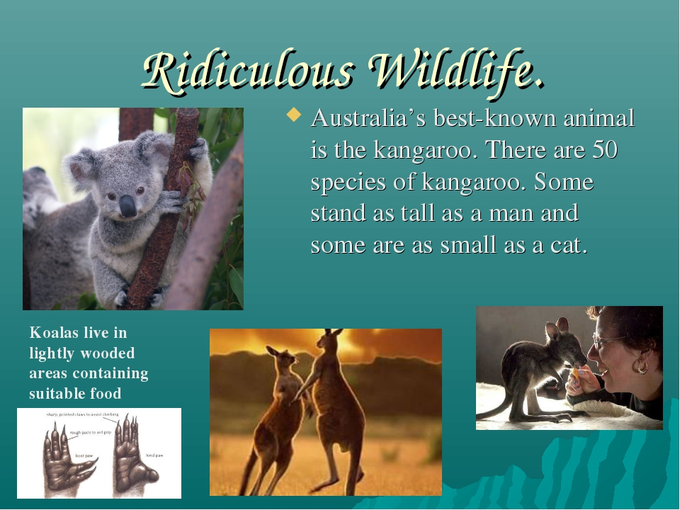 Ridiculous Wildlife. Australia's best-known animal is the kangaroo. There are...